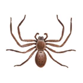 huntsman spider control