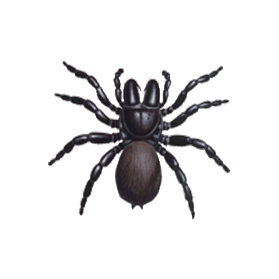 female mouse spider control