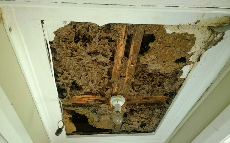 Everything You Must Know About Termites Before Buying a Home