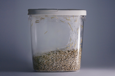 Pantry Moth Larvae in Container